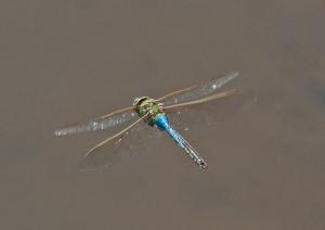 dragonfly_blog