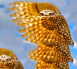 golden-owl