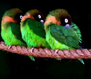 birds-africa-alive-eztd