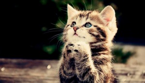 cute-kitten-prays