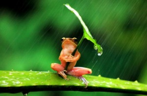frog-under-umbrella-penkdix-palme