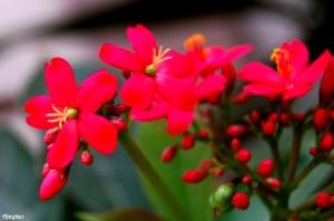 exquisite-pink-beauties-ajaytao