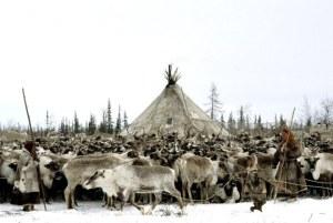 lapland-people-and-reindeer-1