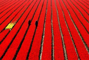 lost-in-an-ocean-of-red-power-focus-fotographie