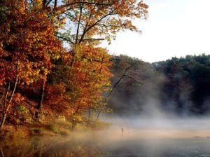 mist-autumn