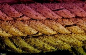rope-ajaytao1