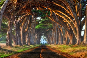 tree-tunnel-california