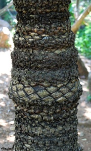 unique-tree-bark-ajaytao1