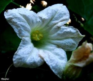 white-light-ajaytao1