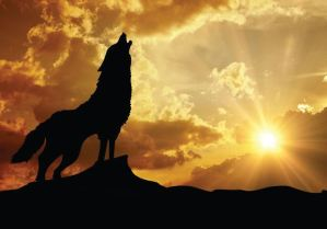 wolf-howl-silhouette1