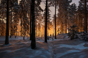 mysterious-glowing-light-in-a-fnland-forest-mikko-lagerstedt